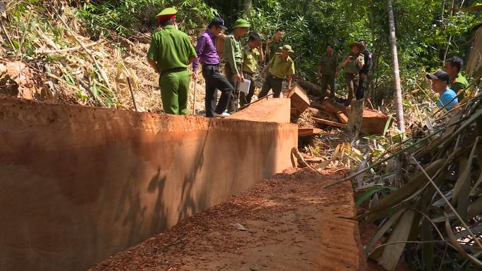 Vụ điều công an khác địa bàn bắt gỗ lậu: Khởi tố 4 cán bộ bảo vệ rừng - Ảnh 1.