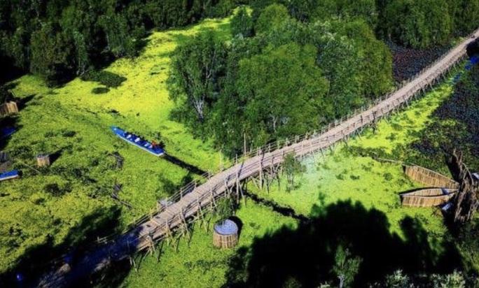 Ngỡ ngàng chiếc cầu tre dài nhất Việt Nam nằm giữa rừng tràm - Ảnh 1.