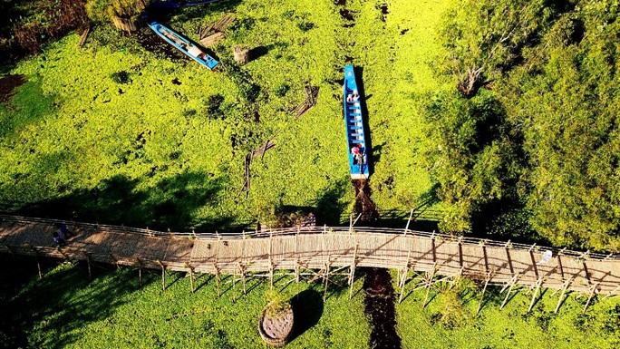 Ngỡ ngàng chiếc cầu tre dài nhất Việt Nam nằm giữa rừng tràm - Ảnh 4.