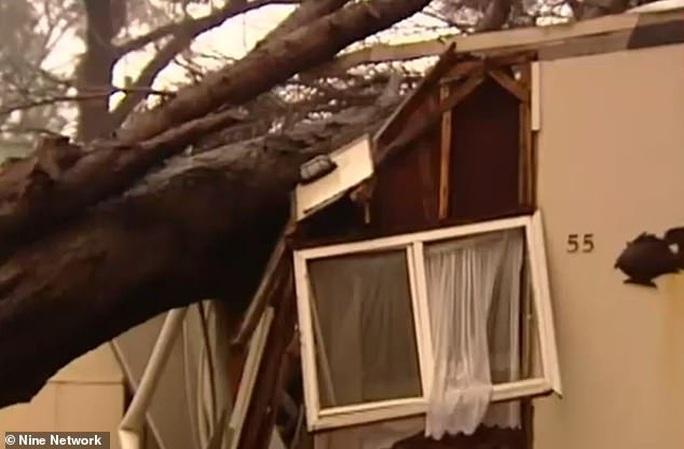 Bom mưa giúp dập tắt cháy rừng, Úc vừa mừng vừa lo - Ảnh 2.