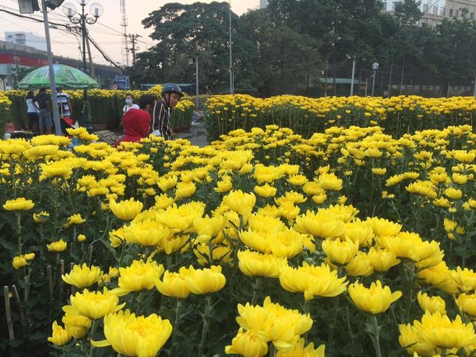 Chợ hoa Tết ở TP HCM đồng loạt mở cửa sáng 23 tháng Chạp - Ảnh 1.