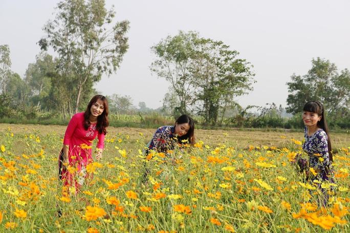 Về Cao Lãnh ngắm cánh đồng hoa rộng hơn 20.000 m2 - Ảnh 2.