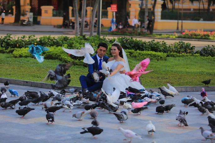 Gần 1.000 chim bồ câu nhuộm màu ở Nhà thờ Đức Bà - Ảnh 3.