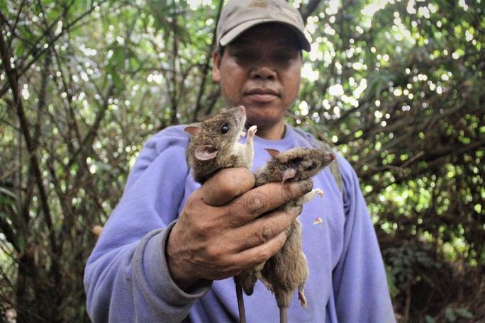 Săn chuột núi - Ảnh 1.