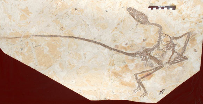 Châu Á: lộ diện quái thú đầu khủng long, đuôi phượng hoàng - Ảnh 2.