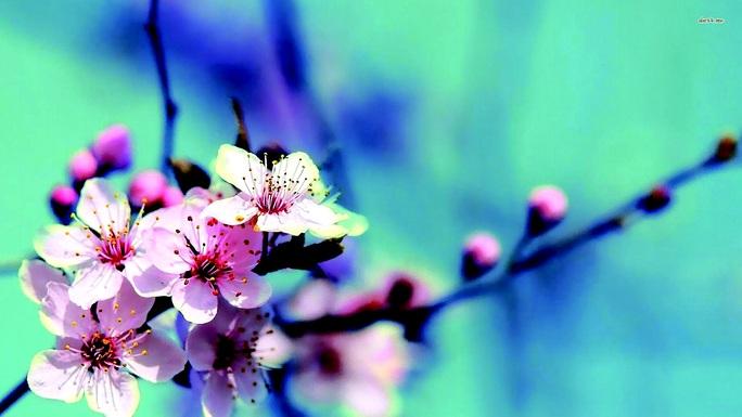 Rộn ràng Mùa Xuân đầu tiên - Ảnh 1.