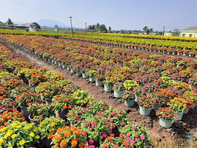 Làng hoa lớn nhất Đồng Nai rộn rã ngày cận Tết - Ảnh 2.