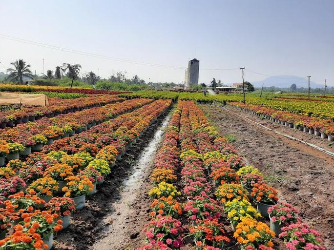 Làng hoa lớn nhất Đồng Nai rộn rã ngày cận Tết - Ảnh 1.