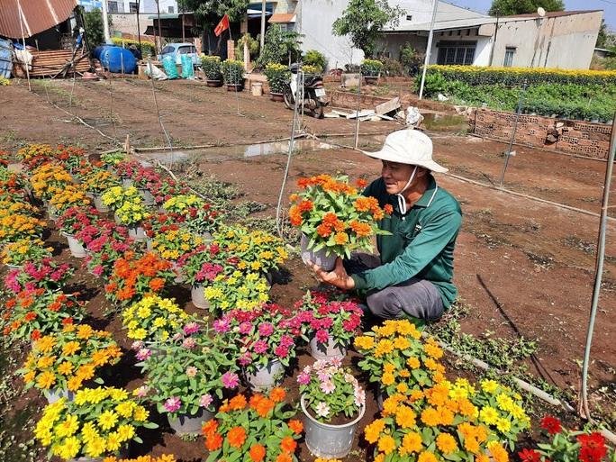 Làng hoa lớn nhất Đồng Nai rộn rã ngày cận Tết - Ảnh 6.
