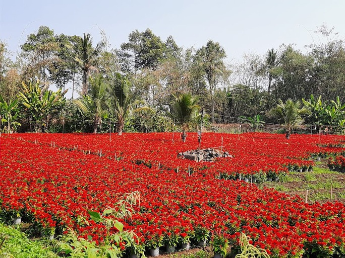 Làng hoa lớn nhất Đồng Nai rộn rã ngày cận Tết - Ảnh 7.