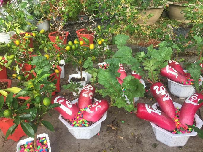Ngỡ ngàng với nhiều loại hoa kiểng, trái độc lạ dịp Tết - Ảnh 3.