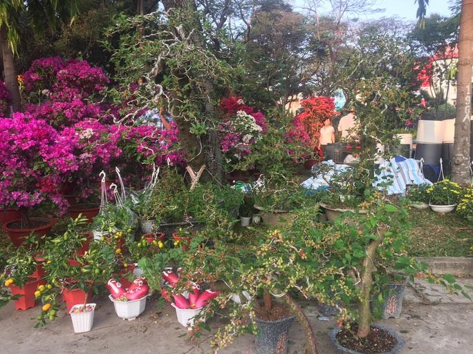 Ngỡ ngàng với nhiều loại hoa kiểng, trái độc lạ dịp Tết - Ảnh 4.