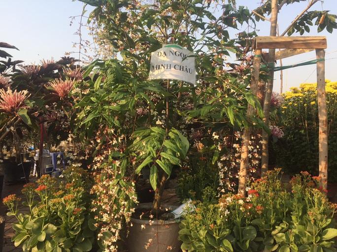 Ngỡ ngàng với nhiều loại hoa kiểng, trái độc lạ dịp Tết - Ảnh 6.