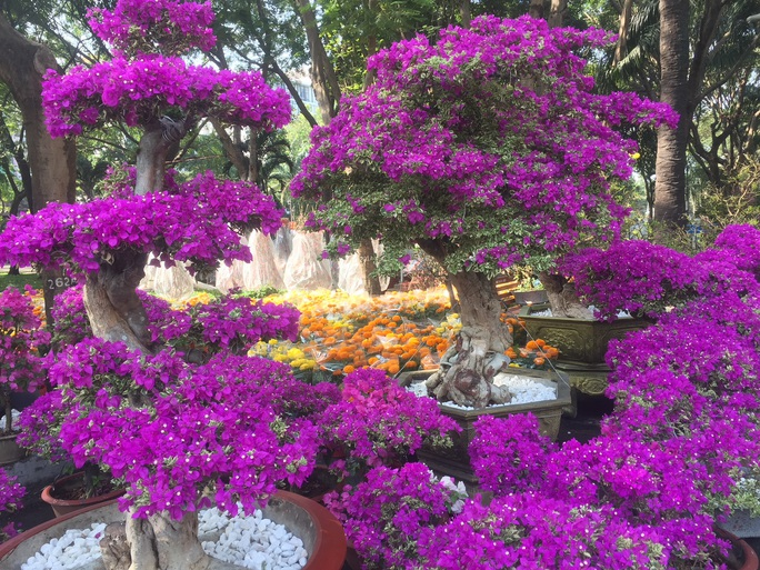 Ngỡ ngàng với nhiều loại hoa kiểng, trái độc lạ dịp Tết - Ảnh 12.