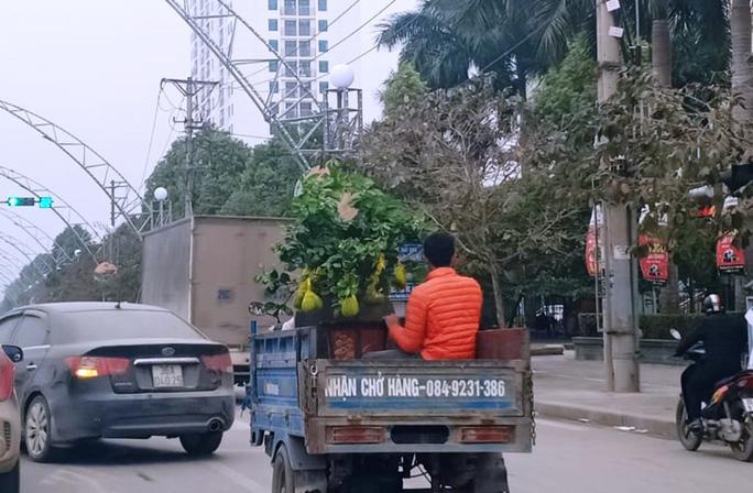 CLIP: Kiếm tiền triệu mỗi ngày nhờ làm cửu vạn cây cảnh thuê ngày Tết - Ảnh 4.