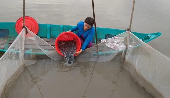 CLIP: Về Cà Mau xem nông dân bắt cá kèo ăn Tết  - Ảnh 7.