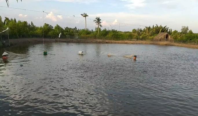 CLIP: Về Cà Mau xem nông dân bắt cá kèo ăn Tết  - Ảnh 3.
