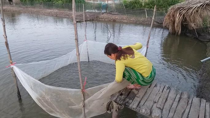 CLIP: Về Cà Mau xem nông dân bắt cá kèo ăn Tết  - Ảnh 6.
