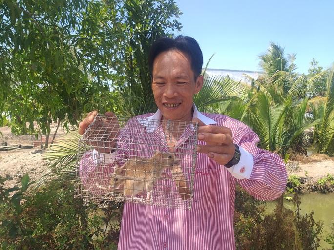 CLIP: Nông dân Cà Mau bắt được cặp chuột lông vàng lạ mắt ngày cuối năm - Ảnh 3.
