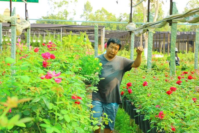 """""""Ngất ngây"""" với vườn hoa hồng Pháp tuyệt đẹp được tham quan miễn phí dịp Tết - Ảnh 1."""