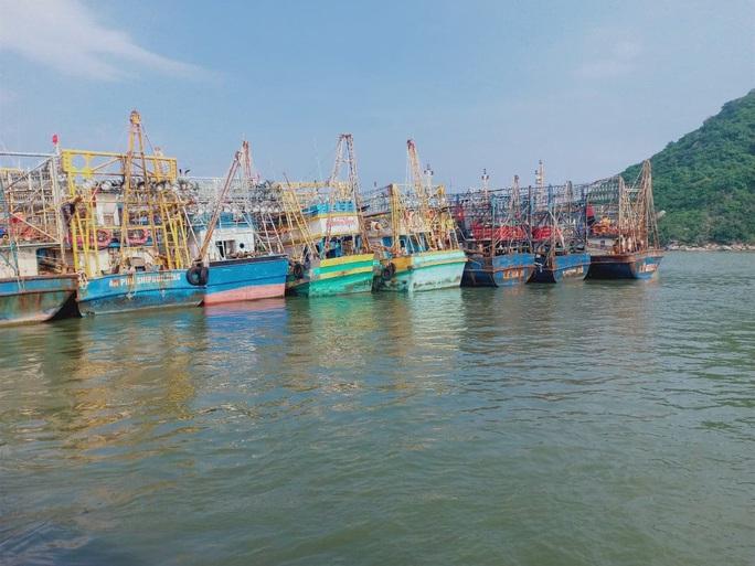 Phó Chủ tịch tỉnh Bình Định khuyến khích ngư dân kiện bảo hiểm PJICO ra tòa - Ảnh 1.
