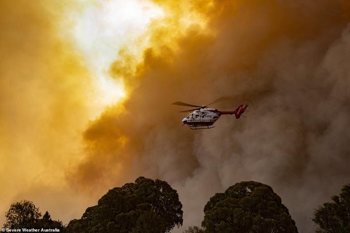 Cháy rừng Úc: Hàng ngàn con kangaroo, koala nằm chết la liệt bên đường - Ảnh 3.