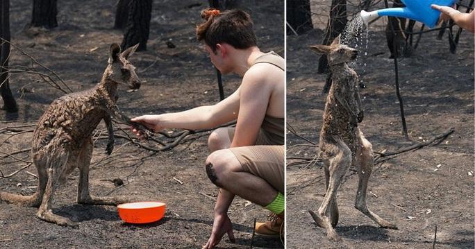 Cháy rừng Úc: Hàng ngàn con kangaroo, koala nằm chết la liệt bên đường - Ảnh 5.