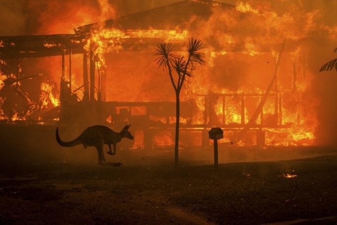 Cháy rừng Úc: Hàng ngàn con kangaroo, koala nằm chết la liệt bên đường - Ảnh 7.