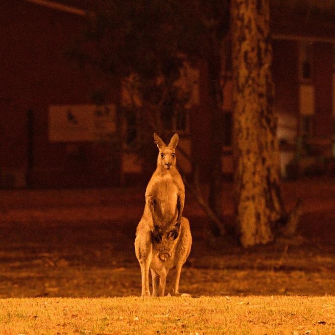 Thần sấm Chris Hemsworth quyên 23 tỉ đồng khắc phục cháy rừng ở Úc - Ảnh 4.