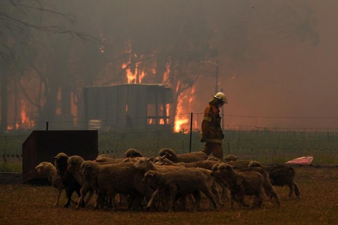 Cháy rừng ở Úc: Điều tồi tệ nhất chưa đến! - Ảnh 1.