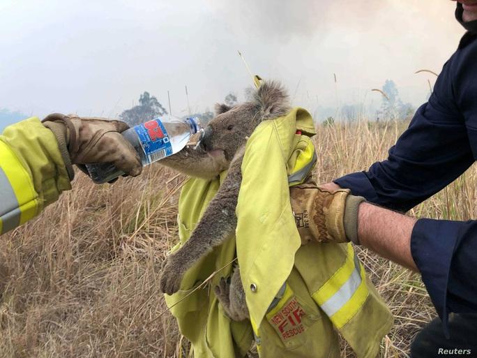 Thần sấm Chris Hemsworth quyên 23 tỉ đồng khắc phục cháy rừng ở Úc - Ảnh 3.