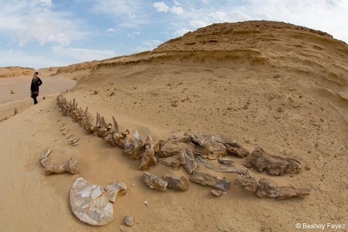 Những nơi trên thế giới... đào đâu cũng thấy quái vật - Ảnh 5.