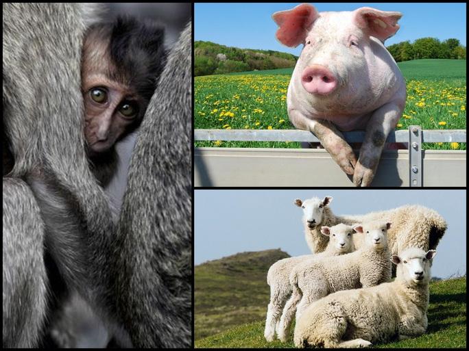 5 sinh vật đã và sẽ... lai với con người - Ảnh 1.