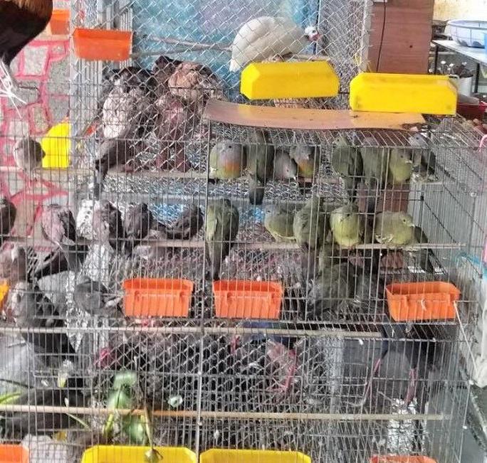 Thừa Thiên - Huế ra chỉ thị cấm săn bắt chim trời - Ảnh 2.