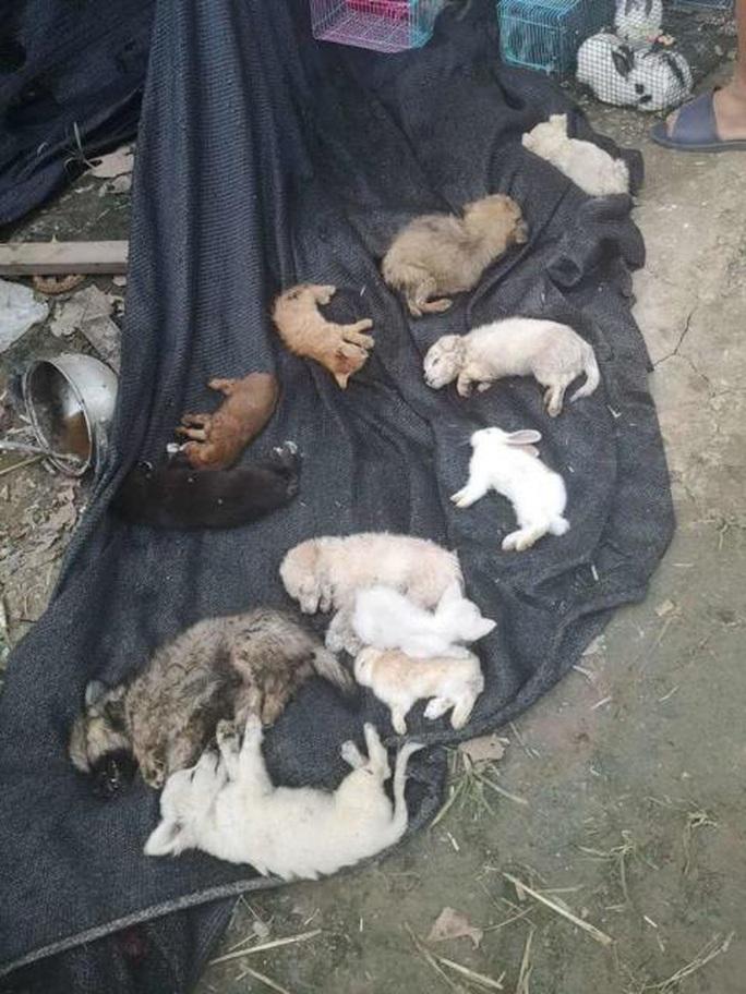 Thảm cảnh của 5.000 thú nuôi chết trong thùng hàng chuyển phát tại Trung Quốc - Ảnh 2.