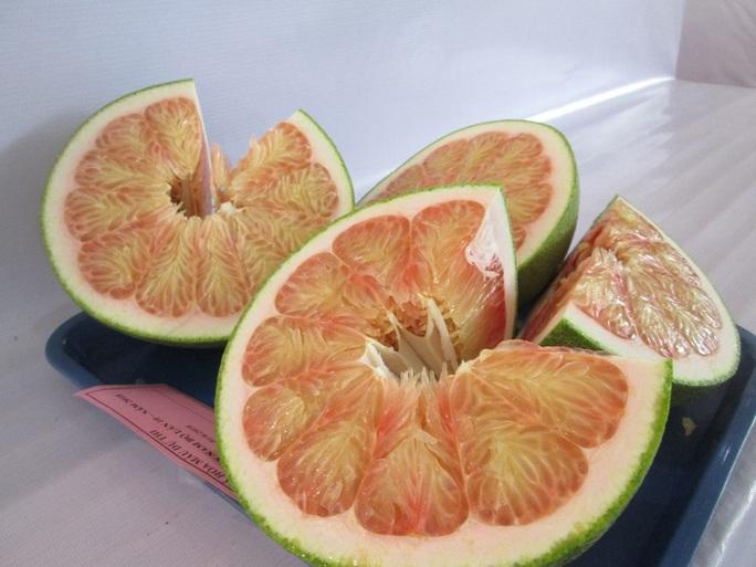 Chi Lê thông báo mở cửa thị trường cho quả bưởi tươi Việt Nam - Ảnh 1.