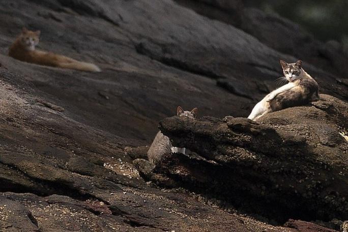Covid-19 biến đảo mèo của Brazil thành đảo ăn thịt - Ảnh 1.