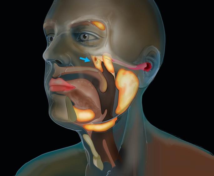 Phát hiện cơ quan chưa từng biết trong cơ thể người, giúp chữa ung thư an toàn - Ảnh 1.