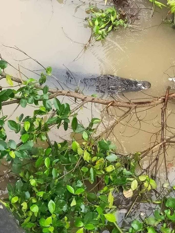 CLIP: Hoảng hốt phát hiện cá sấu to đang dạo chơi trên sông - Ảnh 2.