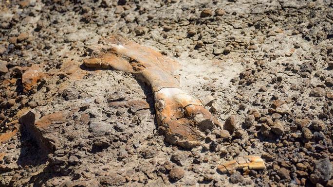 Đi dã ngoại, cậu bé 12 tuổi tìm ra quái thú 69 triệu tuổi - Ảnh 2.