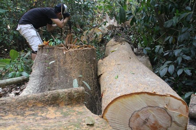 TÀN PHÁ THIÊN NHIÊN VÀ CÁI GIÁ PHẢI TRẢ (*): Mất rừng nguyên sinh, thiên tai khó lường - Ảnh 2.