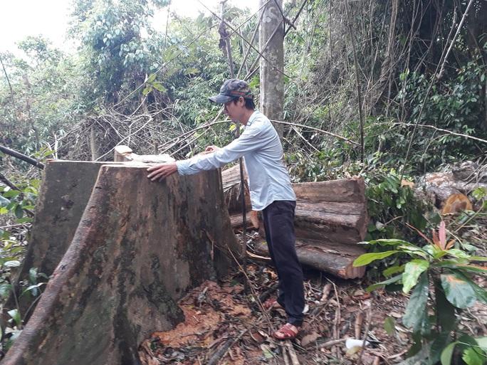 TÀN PHÁ THIÊN NHIÊN VÀ CÁI GIÁ PHẢI TRẢ (*): Mất rừng nguyên sinh, thiên tai khó lường - Ảnh 1.