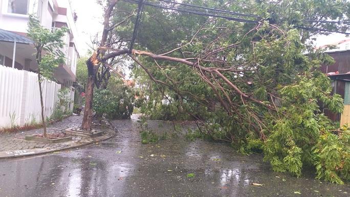 Bão số 9: Đà Nẵng cúp điện nhiều nơi, cây cối ngã đổ - Ảnh 3.