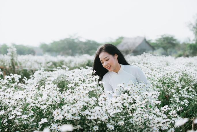 Hà Nội xao xuyến mùa cúc họa mi - Ảnh 1.