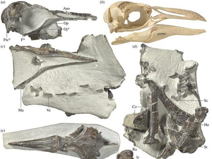 Sốc: loài vật còn sống này đến từ lục địa ma thứ 8 - Ảnh 2.