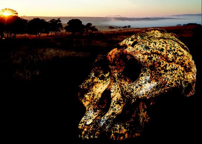 Hài cốt 2 triệu năm tiết lộ sự biến hình gây sốc của… con người - Ảnh 1.
