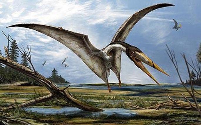 Cá mập trong bảo tàng… hóa quái vật bay chưa từng thấy trên thế giới - Ảnh 1.