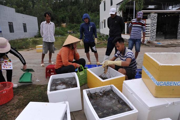 Quặn lòng trước cảnh tôm hùm chết hàng loạt ở Phú Yên - Ảnh 2.