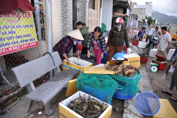 Quặn lòng trước cảnh tôm hùm chết hàng loạt ở Phú Yên - Ảnh 3.