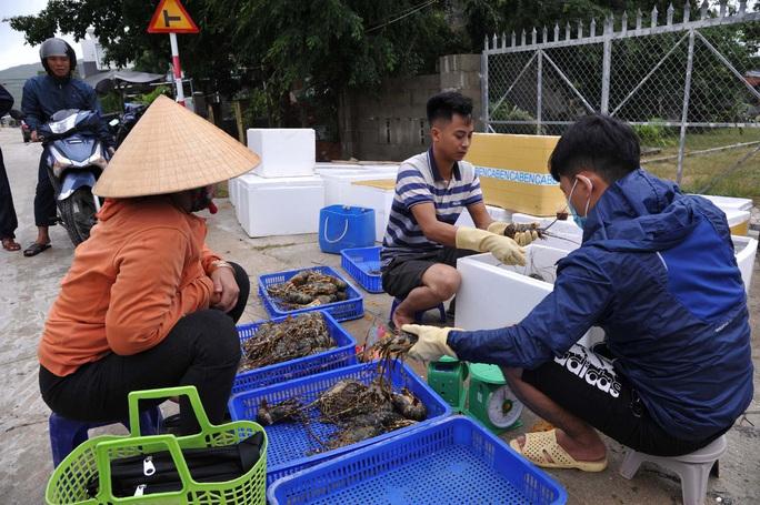 Quặn lòng trước cảnh tôm hùm chết hàng loạt ở Phú Yên - Ảnh 8.